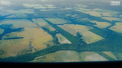Gisele Bündchen: Deforestation and Meat Consumption