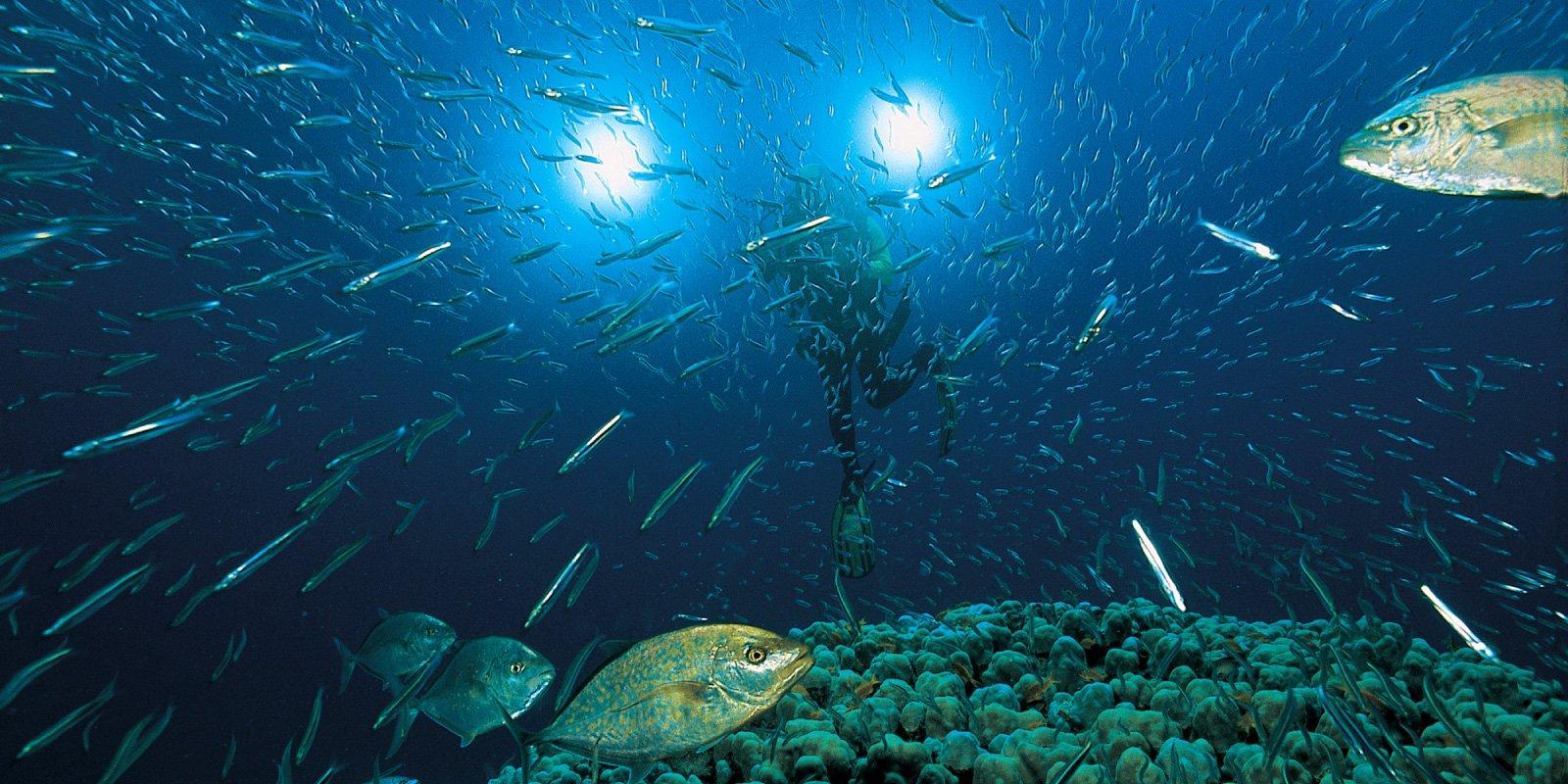 El último santuario del océano amenazado por los intereses de algunos
