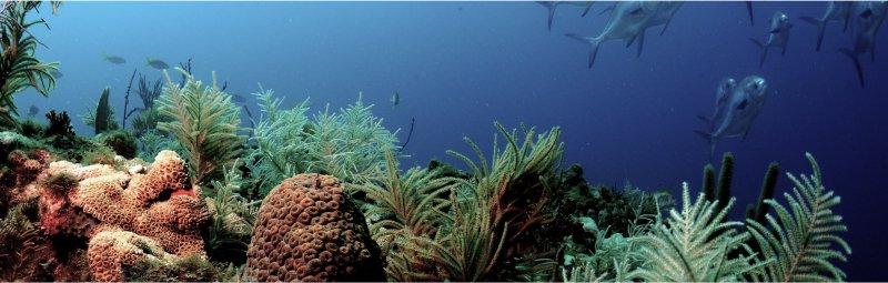 Tips para cuidar nuestros océanos desde casa