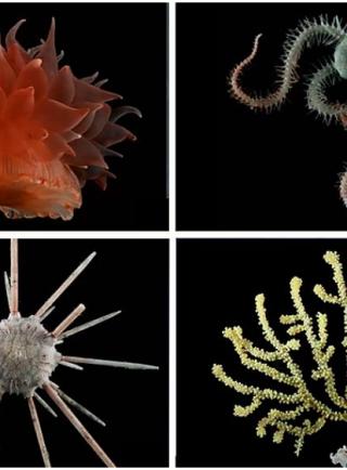 10 cosas que no sabías sobre la vida en las profundidades marinas