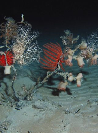 Detengamos la minería submarina con 6 acciones desde nuestras casas