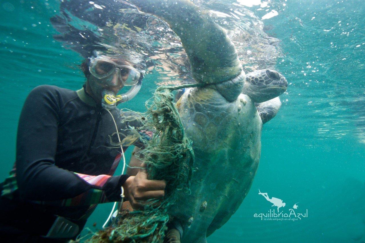 El rescate de las tortugas en Ecuador