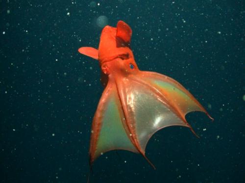 Criaturas del mar profundo con los que tendrás pesadillas