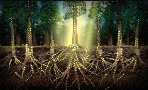 La historia oculta de los hongos una web bajo la tierra