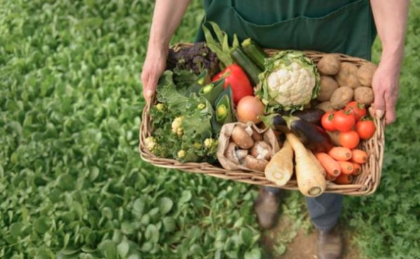 La ciencia y su camino para validar una agricultura más sostenible