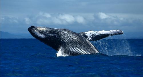 Cuatro victorias medioambientales para nuestro océano