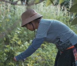 DEFENSORES DE LA TIERRA: LOS ECO-AGRICULTORES DE TAIWAN