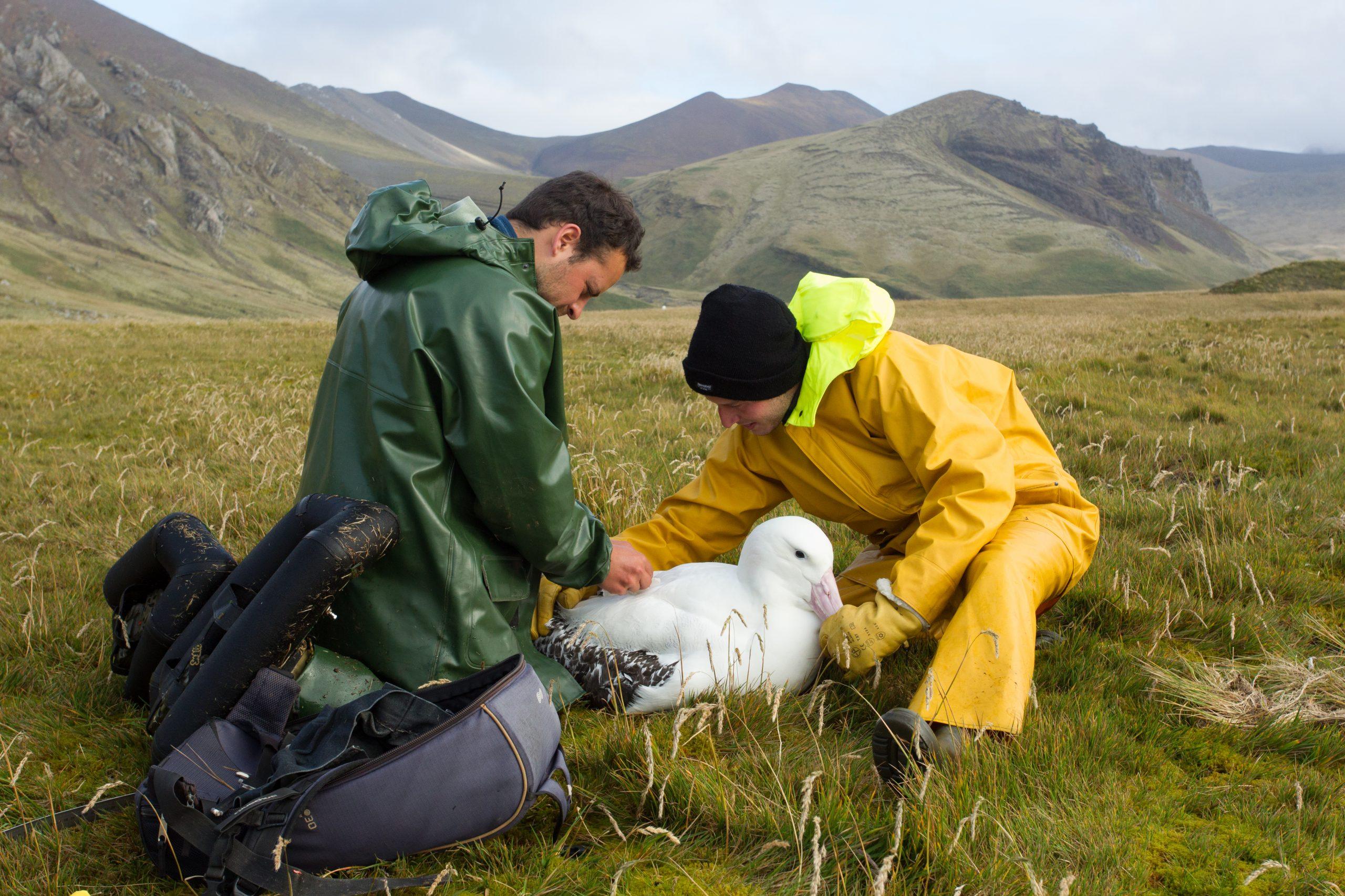 'Albatross Cops' Offer Bird's-Eye-View on Illegal Fishing