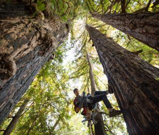 Meet the Tech Startup Revolutionizing Forest Conservation