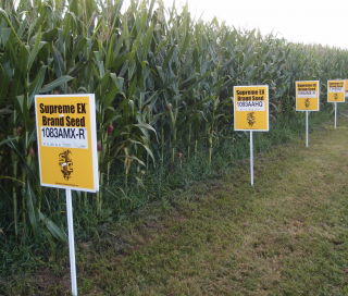 Explainer: GM Crops and Their Role in Modern Agriculture