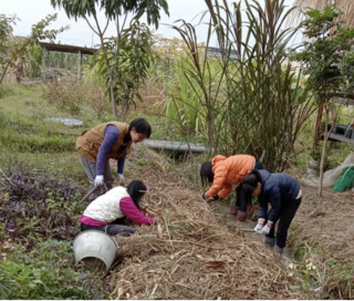 Defenders of the Land: Taiwan's Eco-Agriculturalists